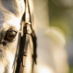 Fine Art Horses: A new offering from Collin Pierson Photography